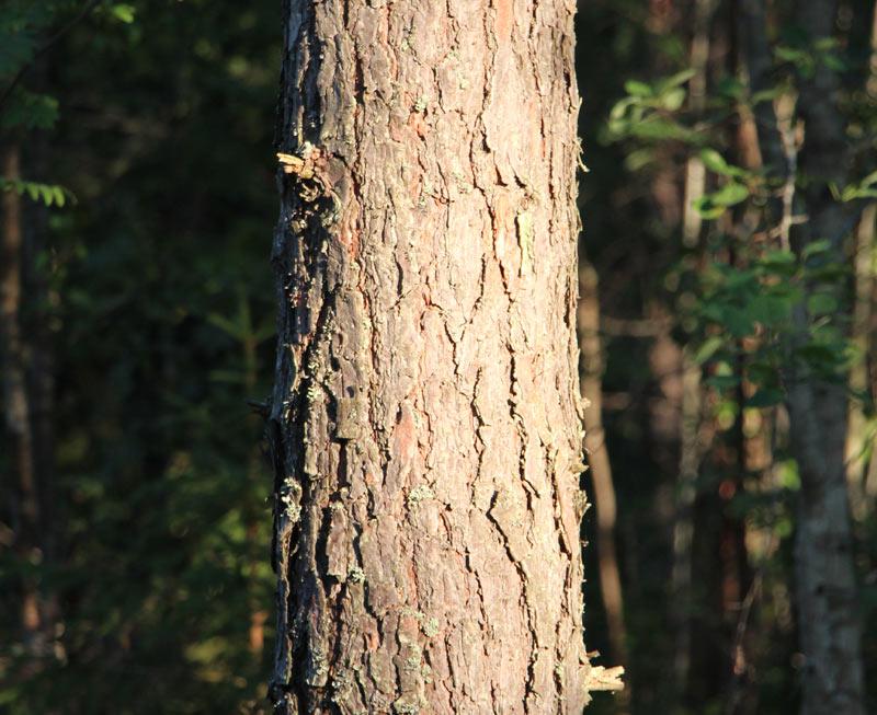 Trestima Oy - Metsänmittausjärjestelmä, puunlaatu