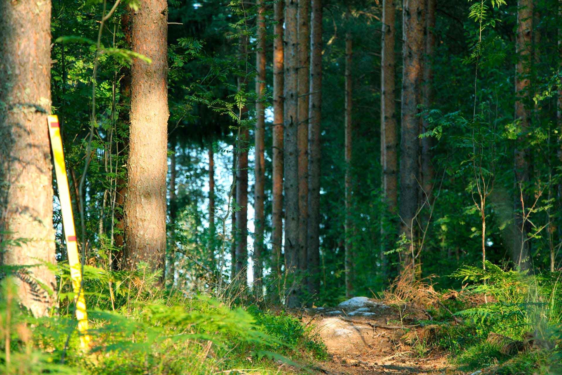 Trestima Oy - Metsänmittausjärjestelmä, metsänsuunnittelijalle ja puunostajalle
